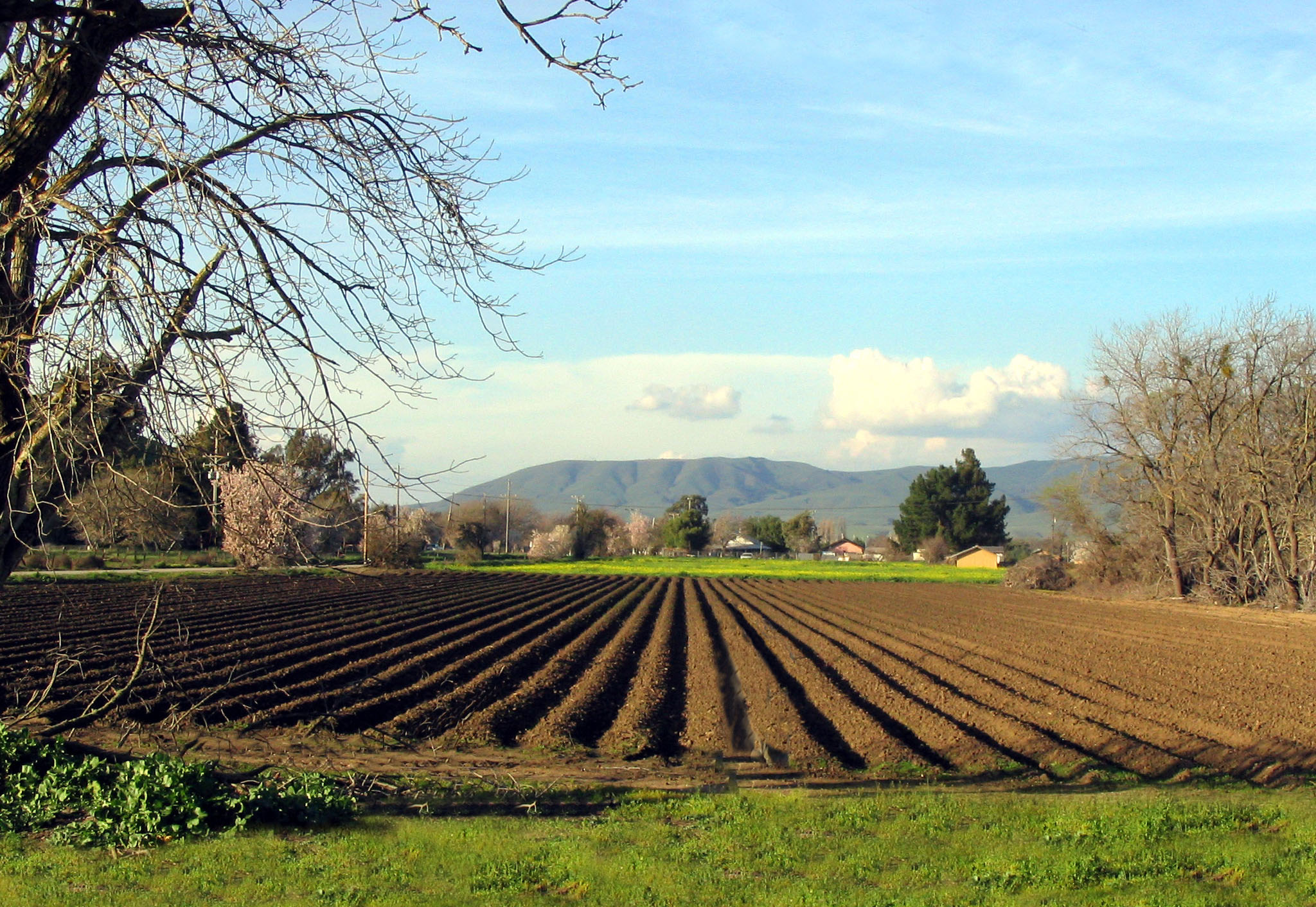 Agriculture: Commercial Agriculture